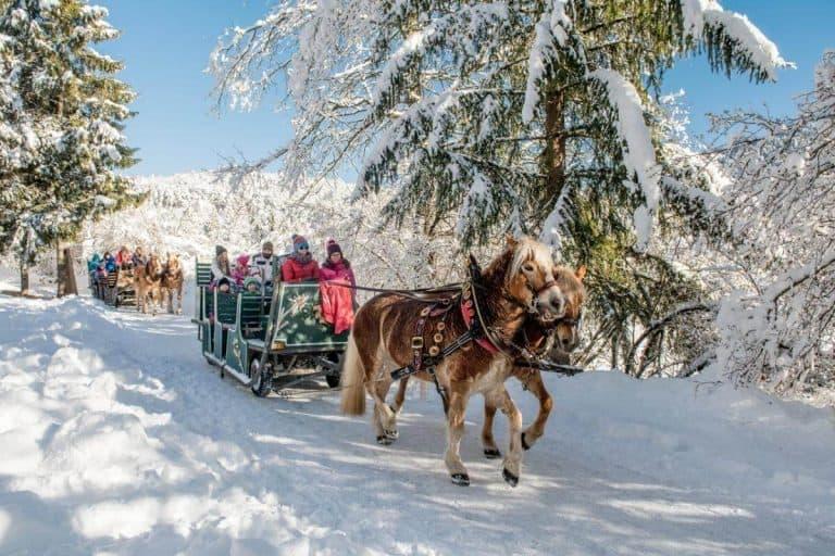 winter Horse sleigh Italy